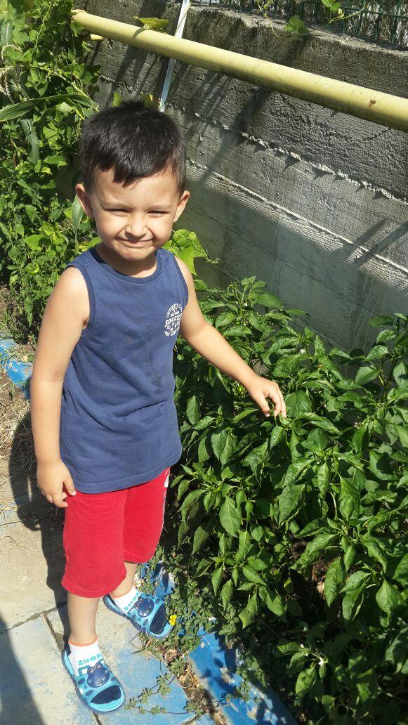Okulumuzun Bahçesindeki Sebzelerimiz